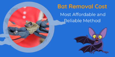 Bat Removal Cost   Most Affordable and Reliable Method   DnR