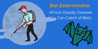 Bat Exterminator    Which Deadly Disease You Can Catch of Bats   DnR