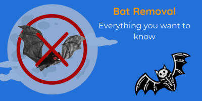 Bat Removal   Everything you want to know   DnR