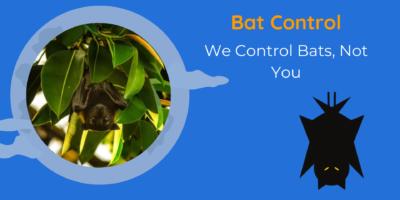 Bat Control   We Control Bats, Not You   DNR