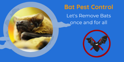 Bat Pest Control   Let's Remove Bats once and for all   DnR